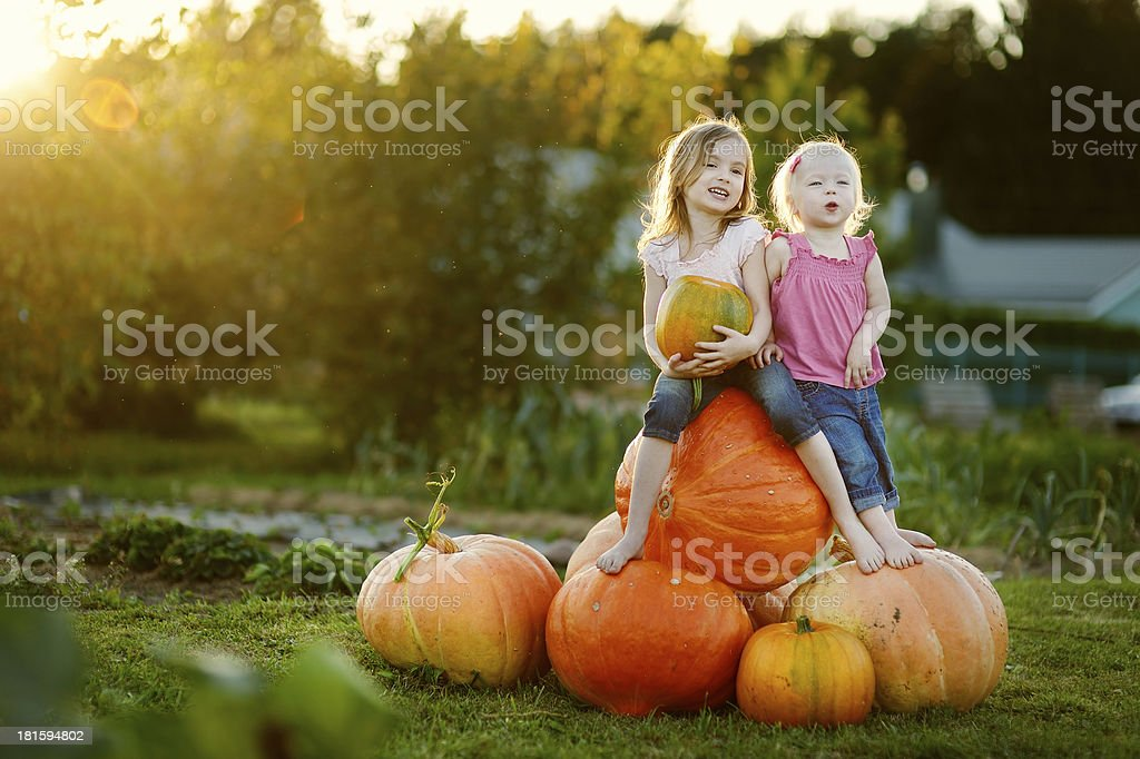 Two young sisters sitting on pile of large pumpkins stock photo