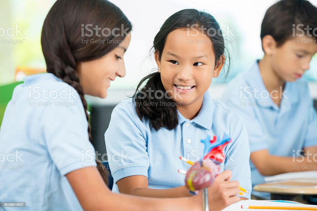 Two young students work together on a biology assignment stock photo