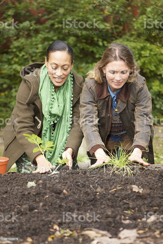 two young women planting in an urban vegetable garden royalty-free stock photo