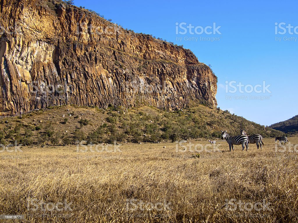 Two zebras stand in background of the canyon royalty-free stock photo