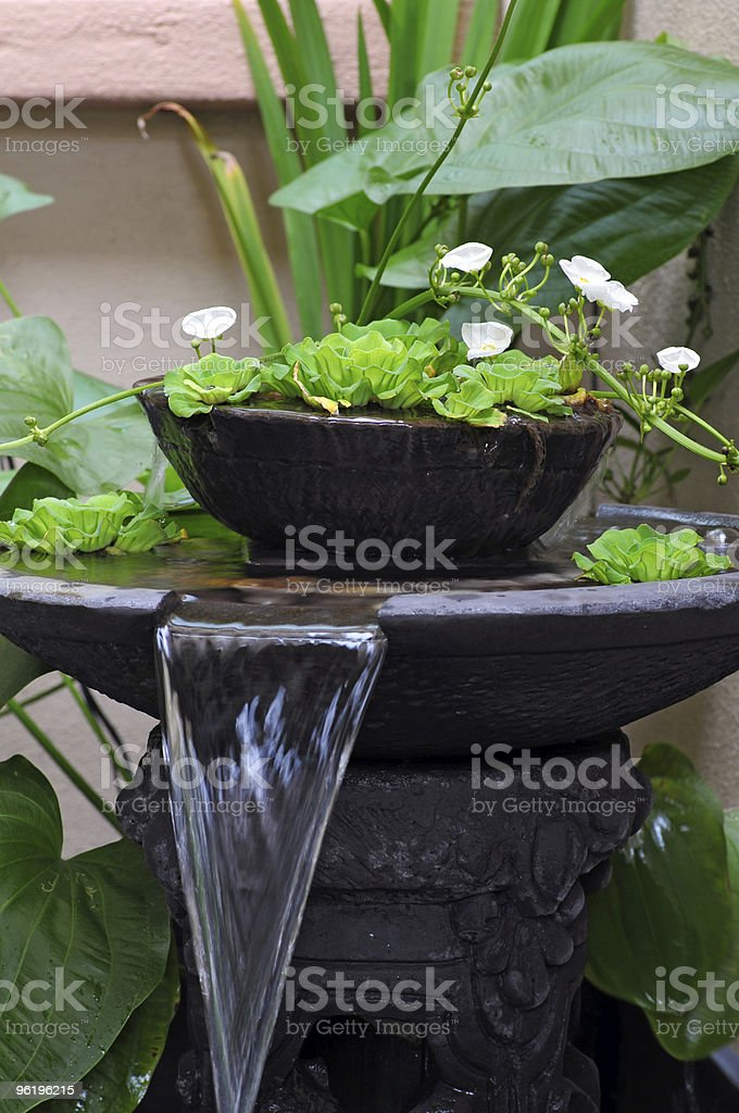 Two-layer metal water fountain with plants grown in water stock photo