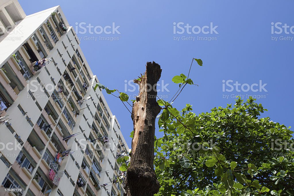Typhoon Damaged Tree royalty-free stock photo