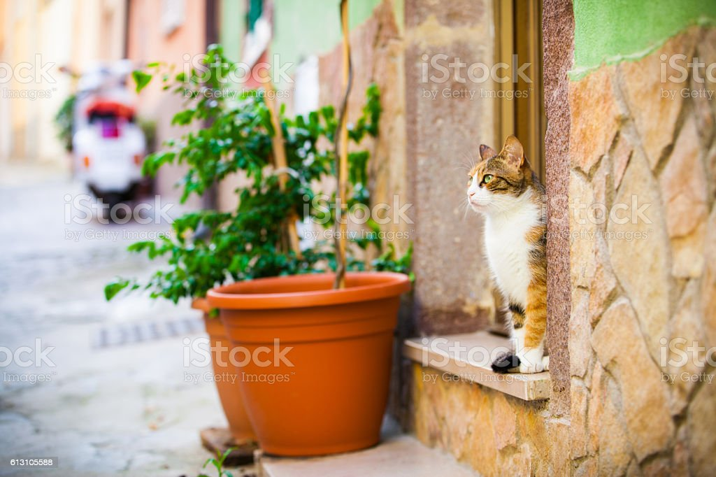 typical alley with cat in Italy stock photo