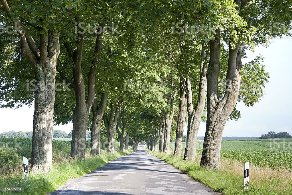 Typical avenue trees in Mecklenburg-Vorpommern stock photo