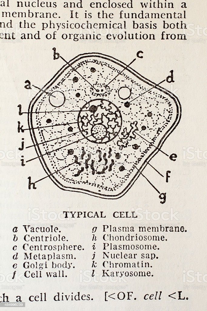 Typical Cell from old dictionary stock photo