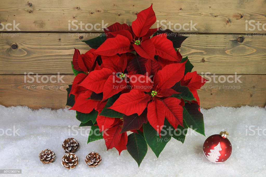 Typical Christmas and holidays Symbols stock photo