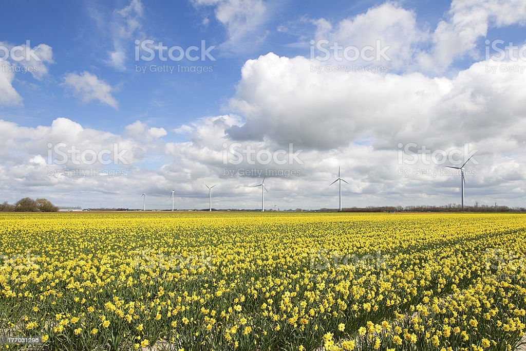 typical dutch landscape royalty-free stock photo