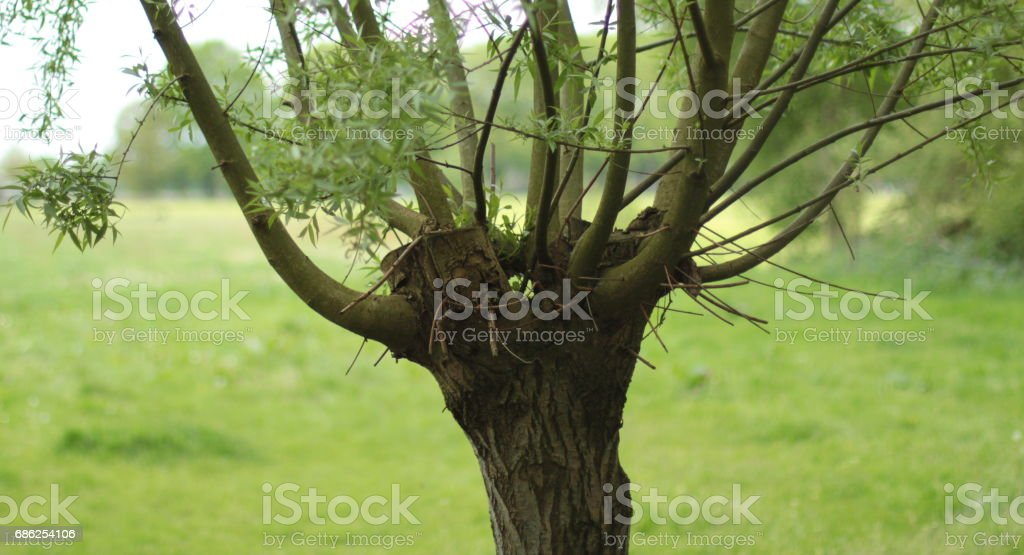 Typical dutch nature on a spring day stock photo
