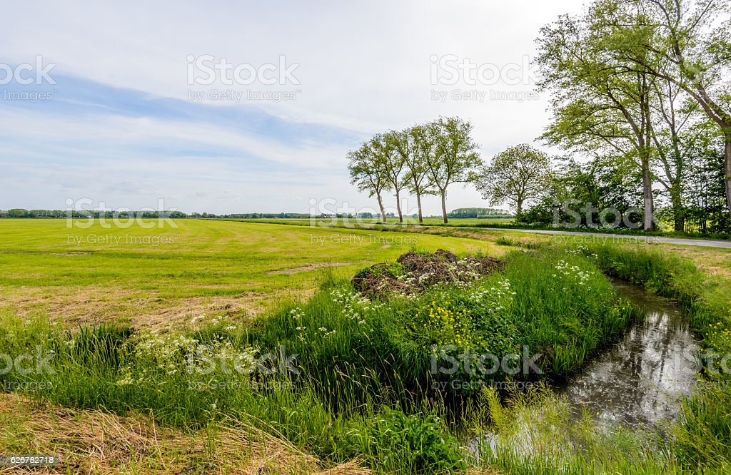 Typical Dutch polder landscape in the spring season. stock photo