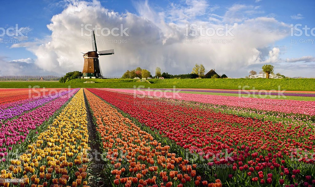 Typical Dutch Spring Landscape royalty-free stock photo