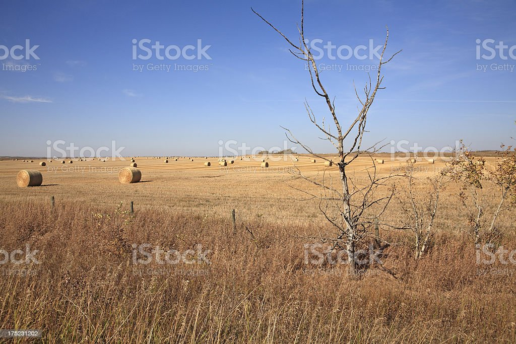 Typical Fall Alberta Landscape royalty-free stock photo