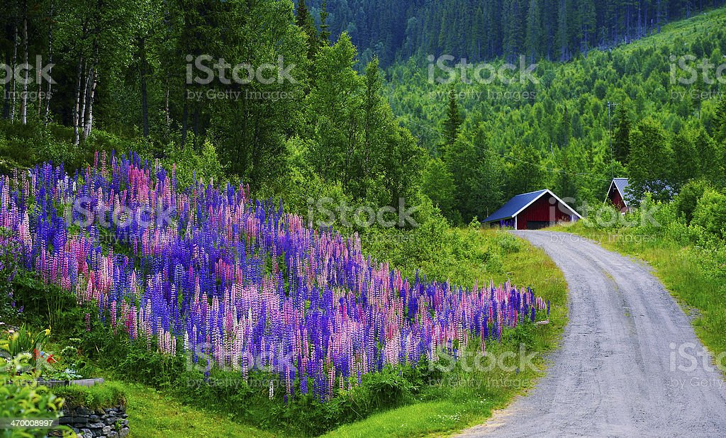 Typical forest in Sweden stock photo