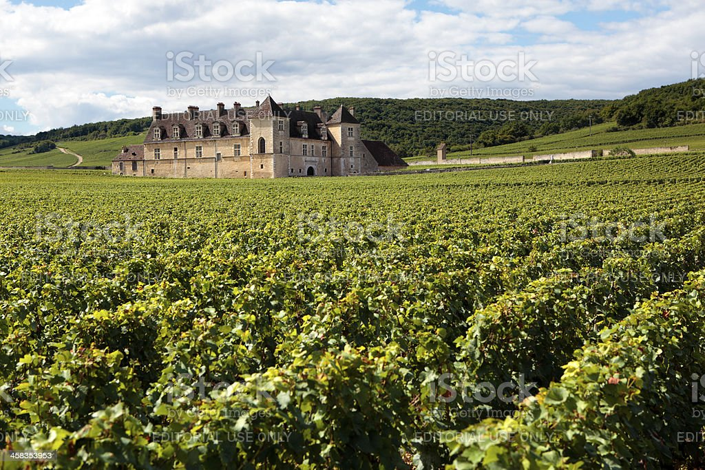 Typical French vineyard and chateau stock photo
