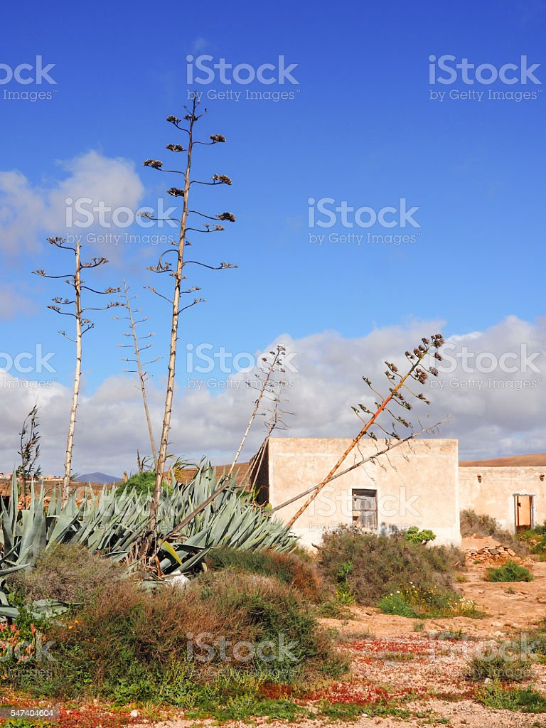 Typical landscape and building of Fuerteventura, Canary Islands stock photo
