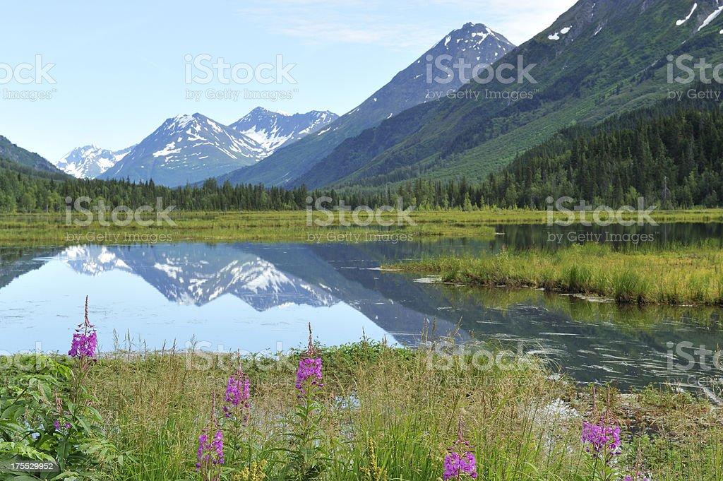 Typical landscape in Alaska stock photo