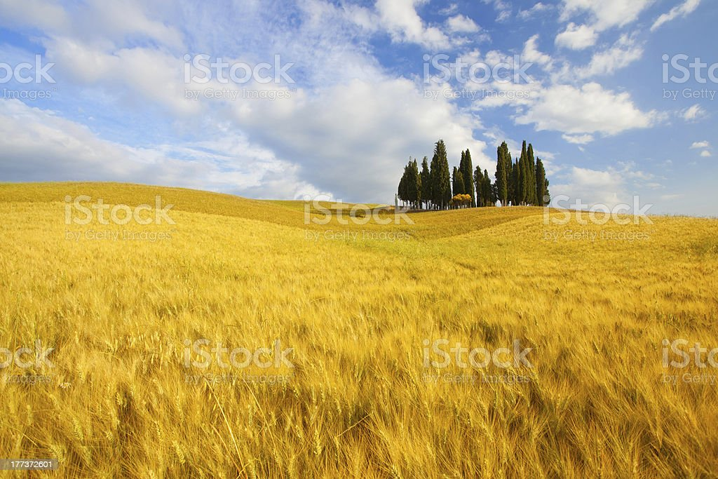 Typical landscape in Tuscany royalty-free stock photo