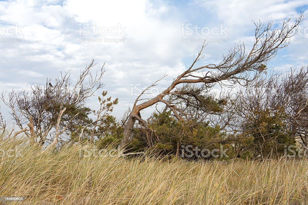 Typical Plants on the Baltic Sea Coast. stock photo