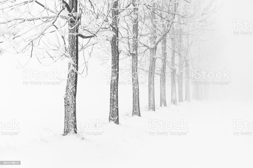 Typical snowy landscape in Ore Mountains, Czech republic. stock photo