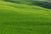 Typical Tuscany landscape, green hills springtime