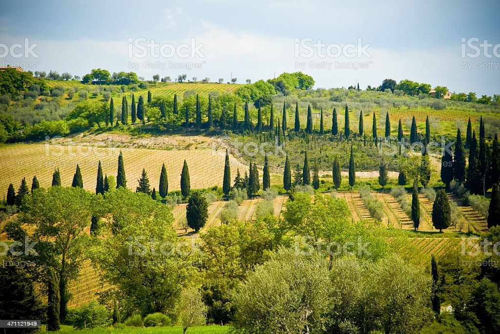 Typical Tuscany View stock photo