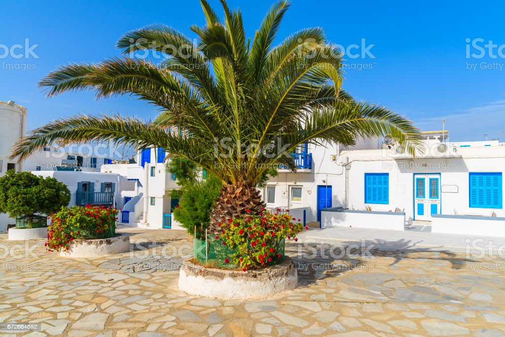 Typical white houses on square with palm tree in Mykonos town on island of Mykonos, Cyclades, Greece stock photo