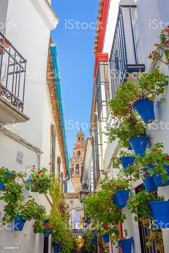 Typical windows with grilles and decorative flowers in the city stock photo