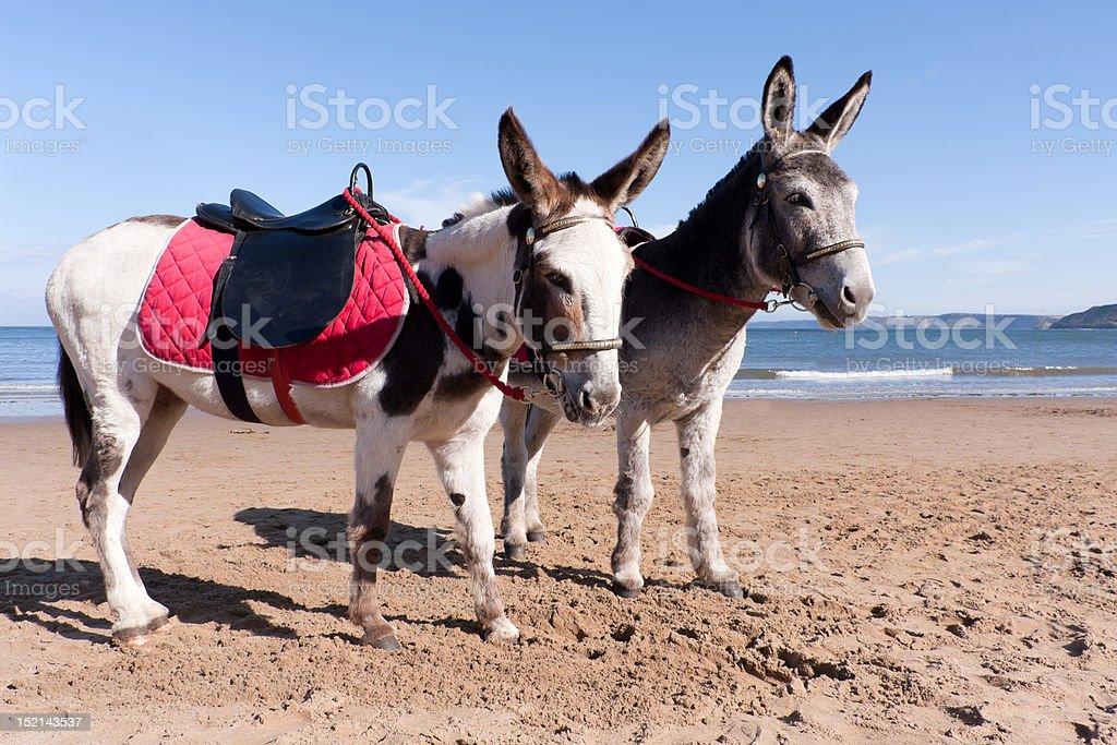 Typically british- Donkey rides on the beach stock photo