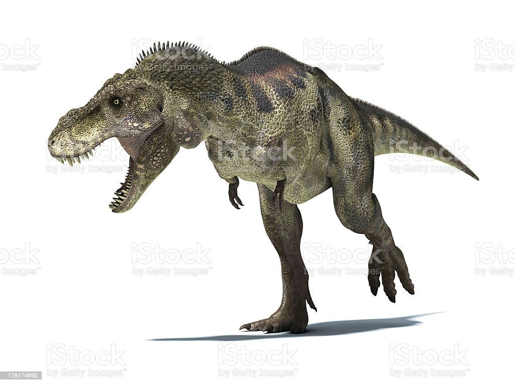 Tyrannosaurus Rex, isolated at white background, clipping path including. stock photo