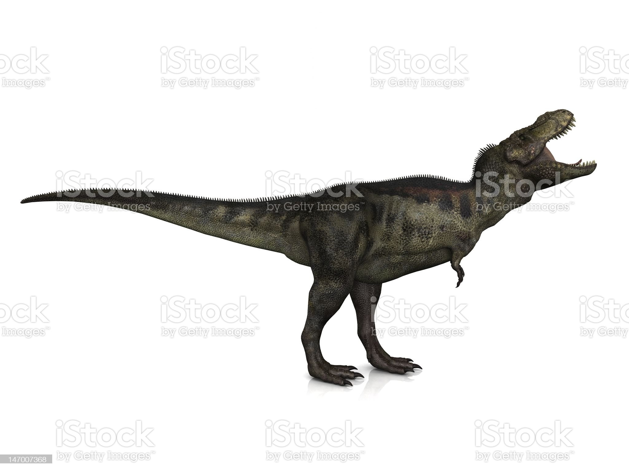 Tyrannosaurus Rex royalty-free stock photo