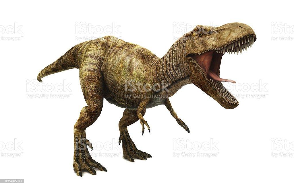 Tyrannosaurus rex stock photo