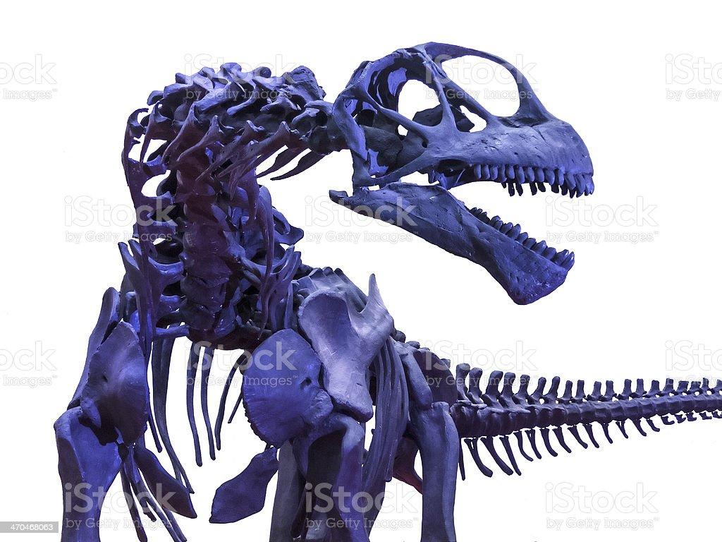 Tyrannosaurus rex skeleton on white stock photo