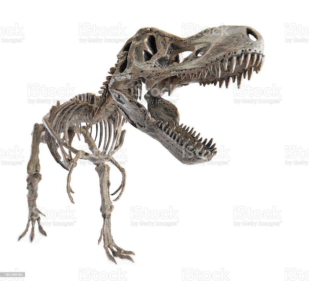 Tyrannosaurus Rex Skeleton royalty-free stock photo