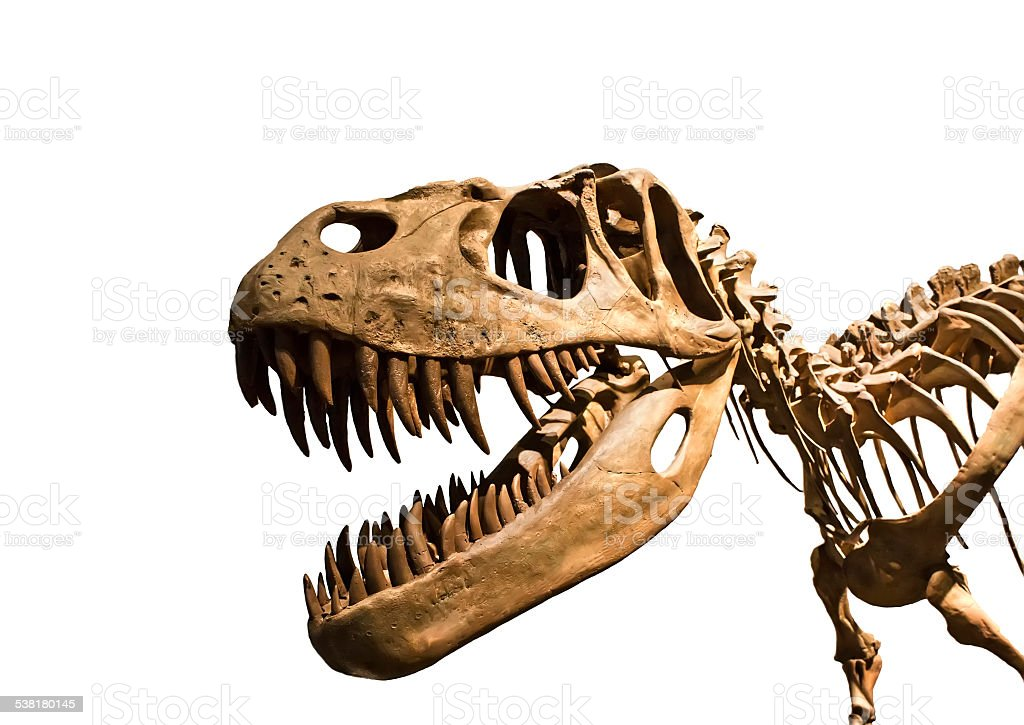 Tyrannosaurus Rex skeleton stock photo