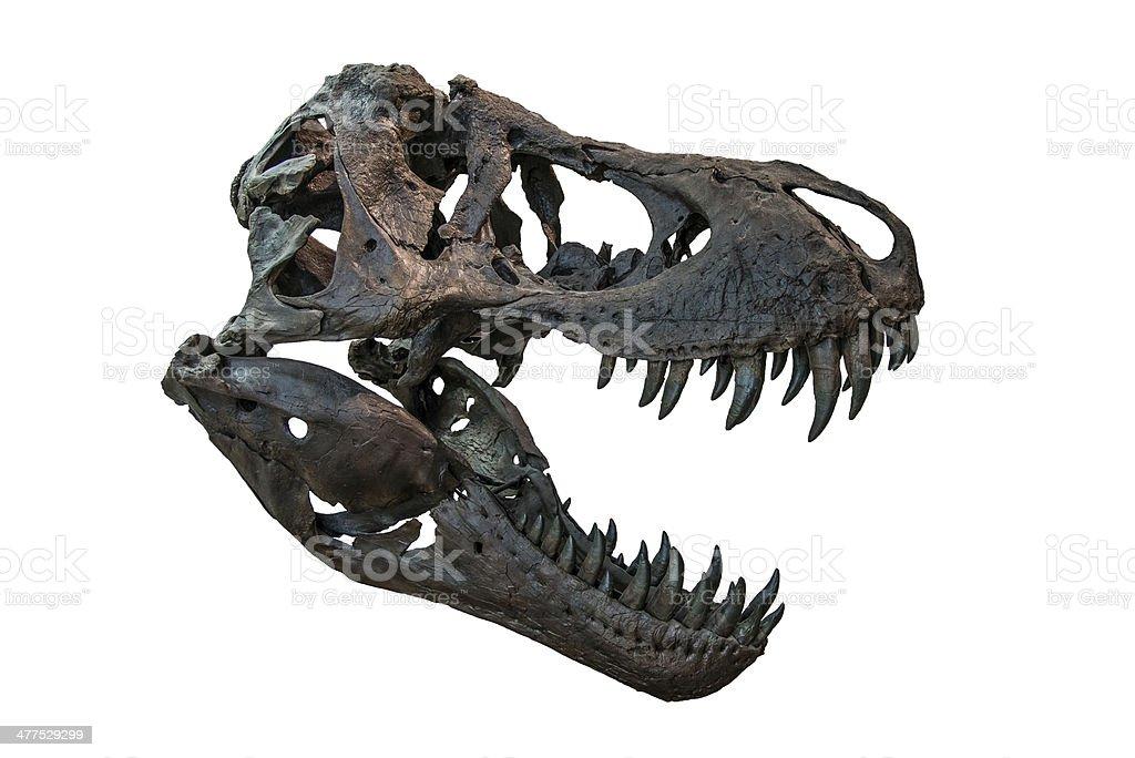 Tyrannosaurus Rex Skull stock photo
