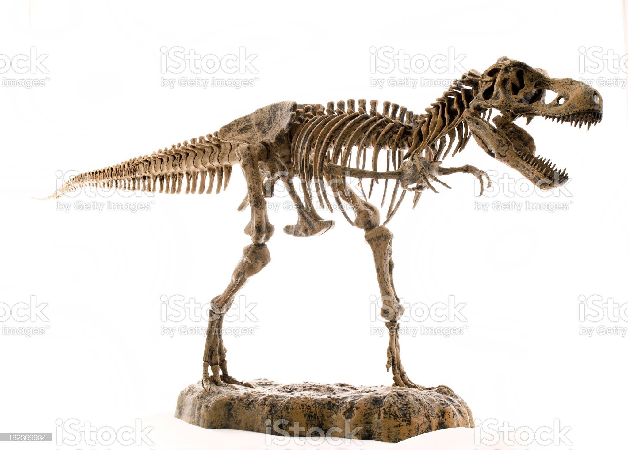 tyranosaurus rex skeleton, dinosaure squelette royalty-free stock photo