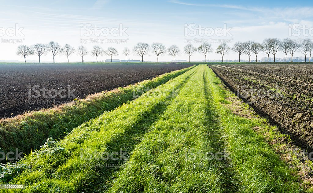 Tyre tracks in grass stock photo