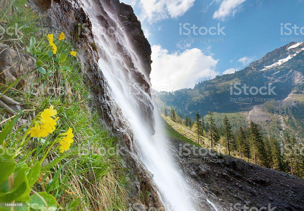 tyrolean cascade with auricula, alps, austria, tirol royalty-free stock photo