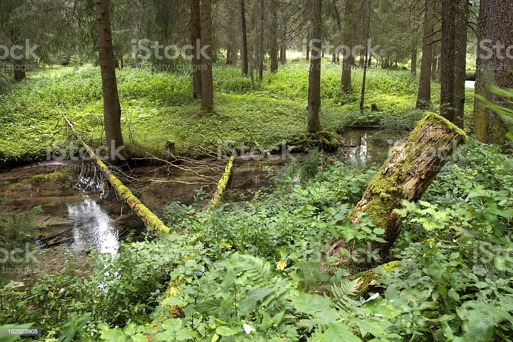 Tyrolean Forest royalty-free stock photo