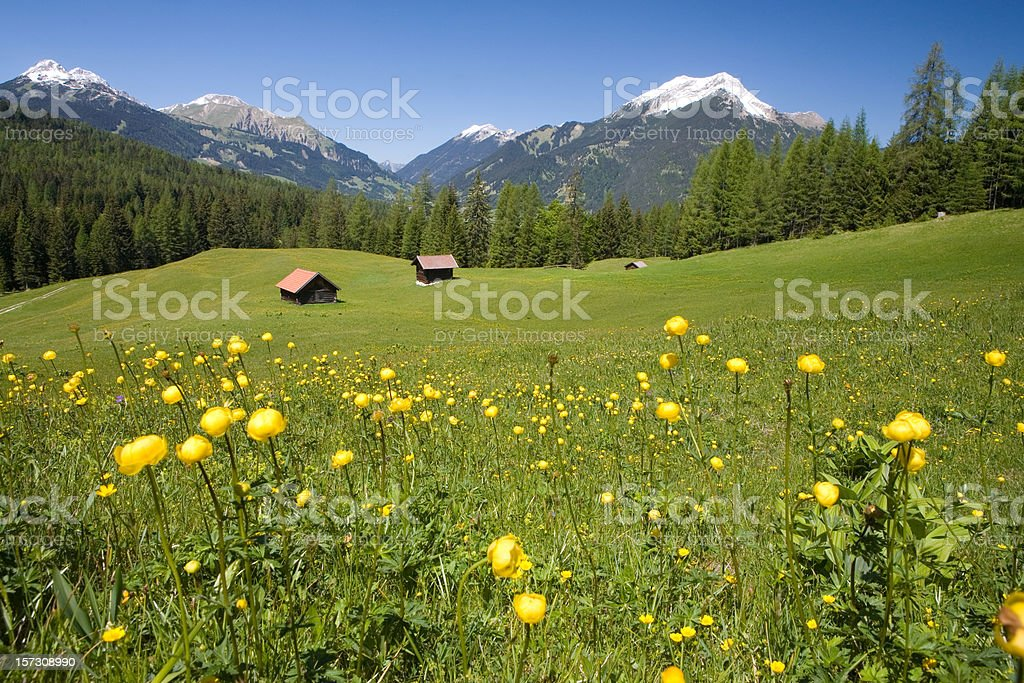 tyrolean summer meadow royalty-free stock photo