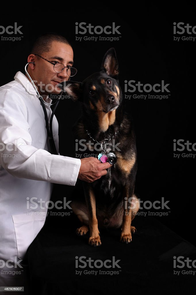 Tyson Goes to the Doctor royalty-free stock photo