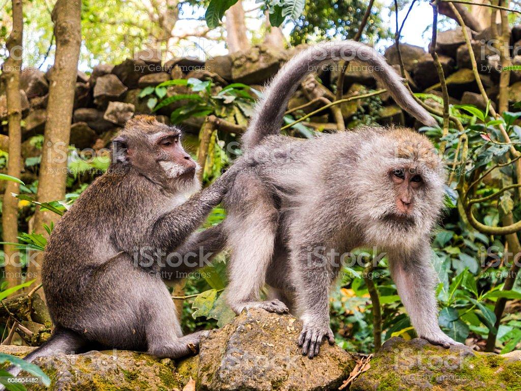 Ubud Monkey Forest in Bali, Indonesia stock photo