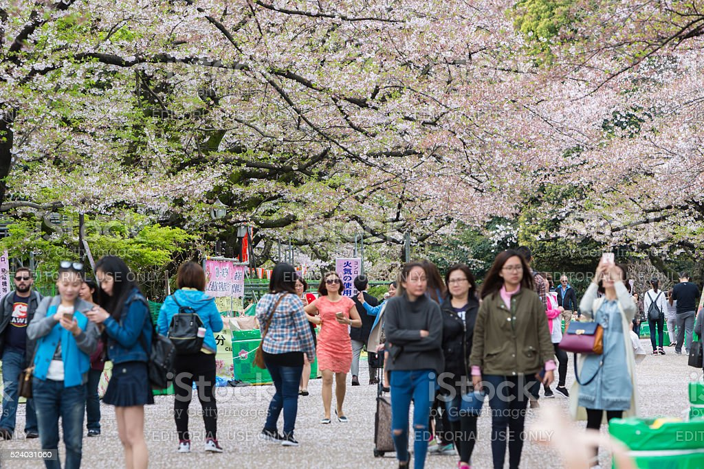 Ueno Park in spring season with cherry blossom. stock photo