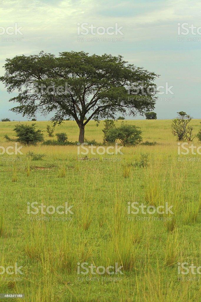 Ugandan Savanna stock photo