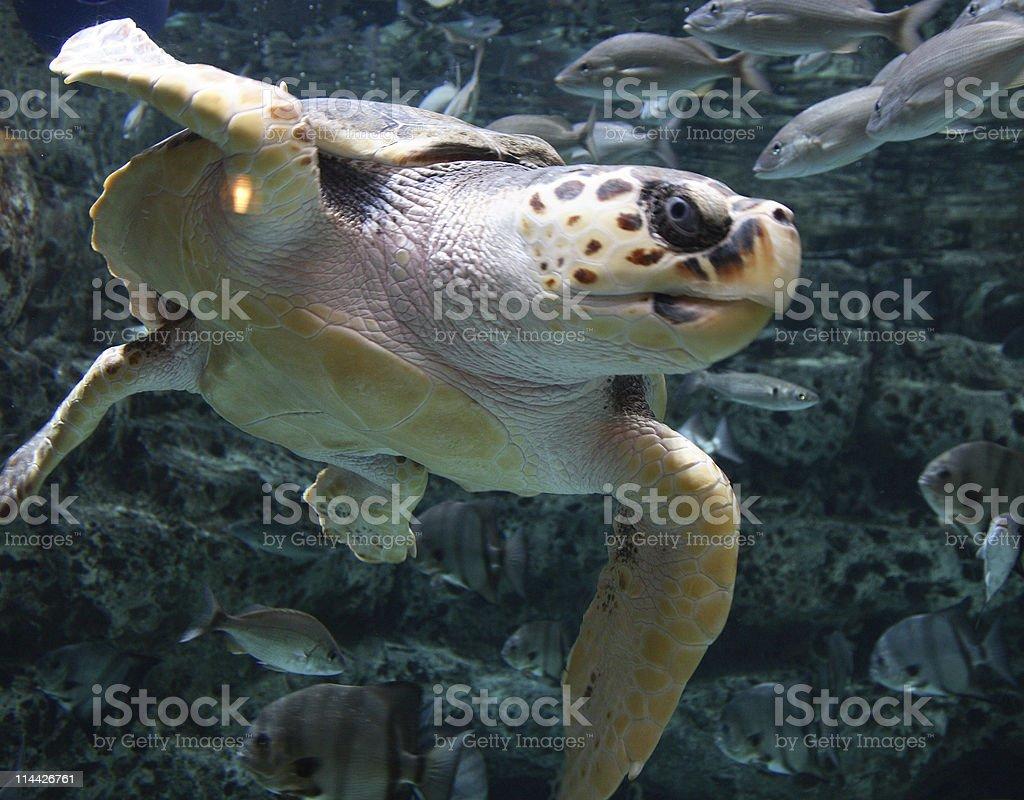 ugly turtle stock photo