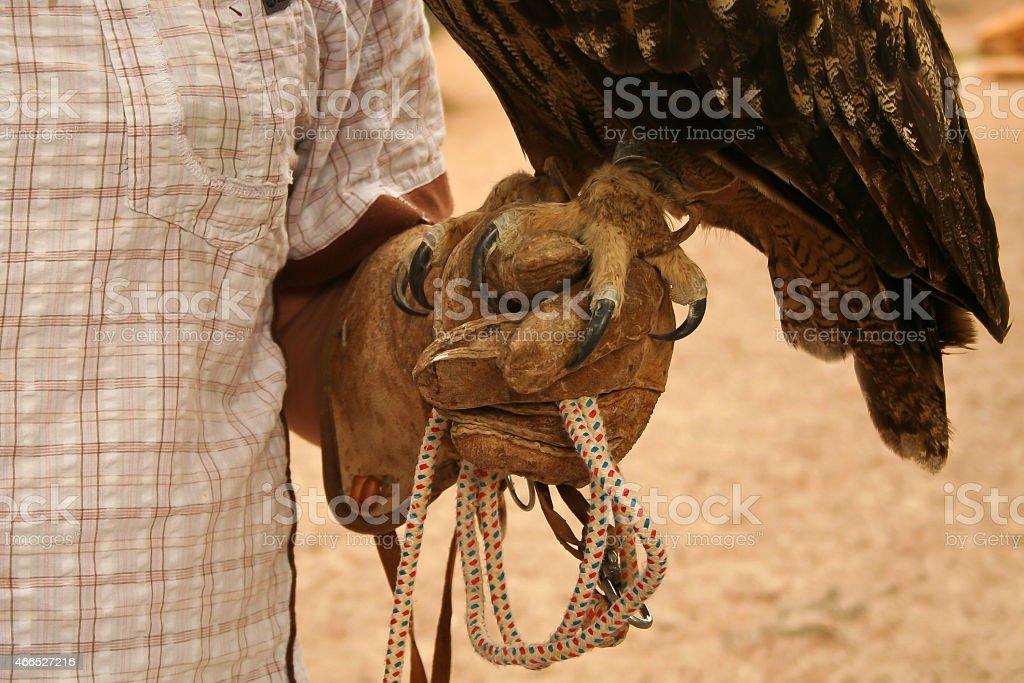 Uhu auf der Hand eines Falkners stock photo