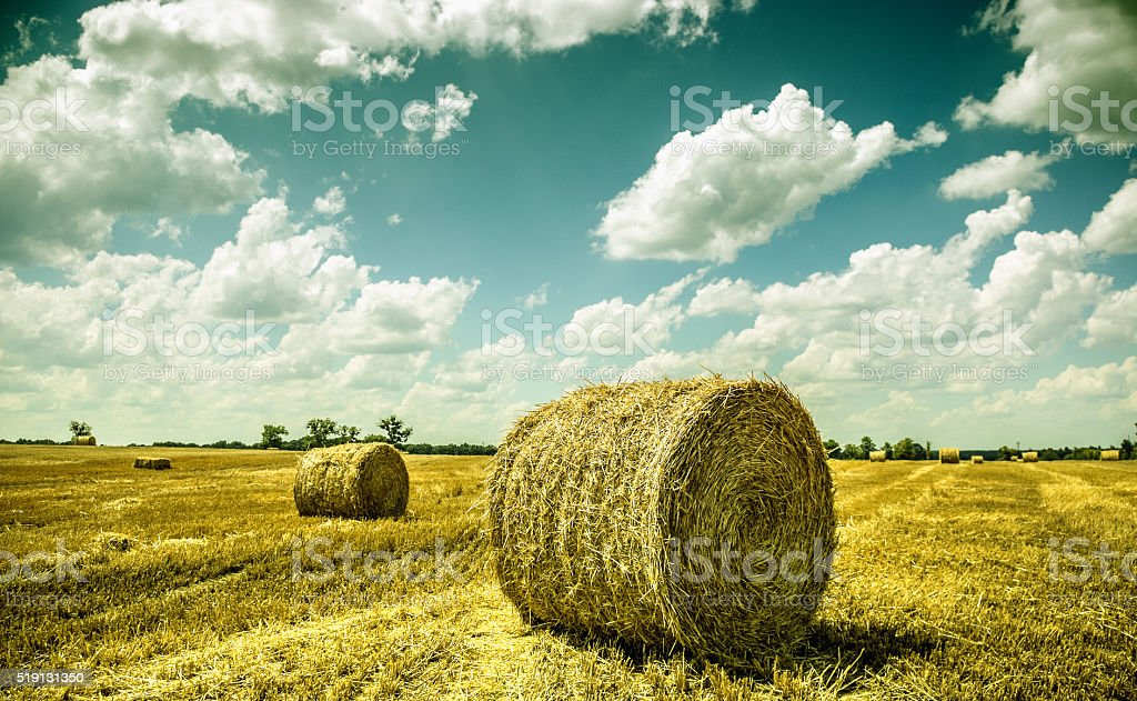 ukraine landscape stock photo