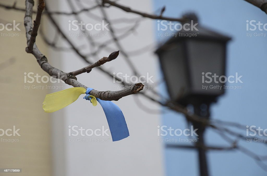 Ukrainian ribbon in the bare twig stock photo