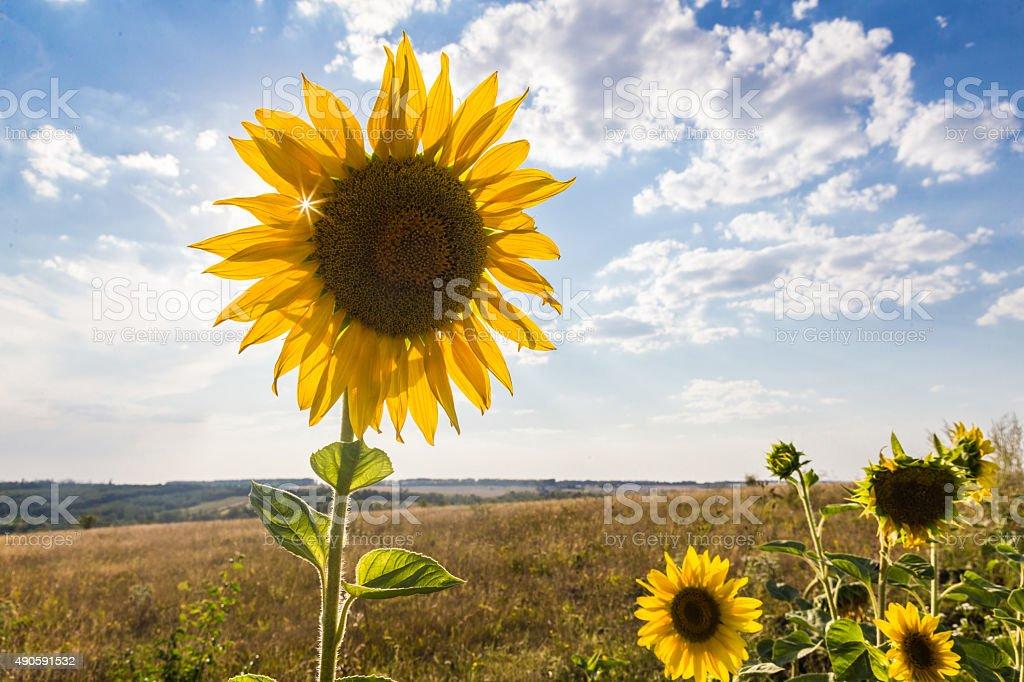 Ukrainian summer stock photo