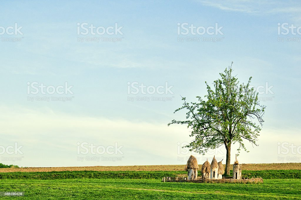 Ukrainian wooden hives in a field under a tree stock photo