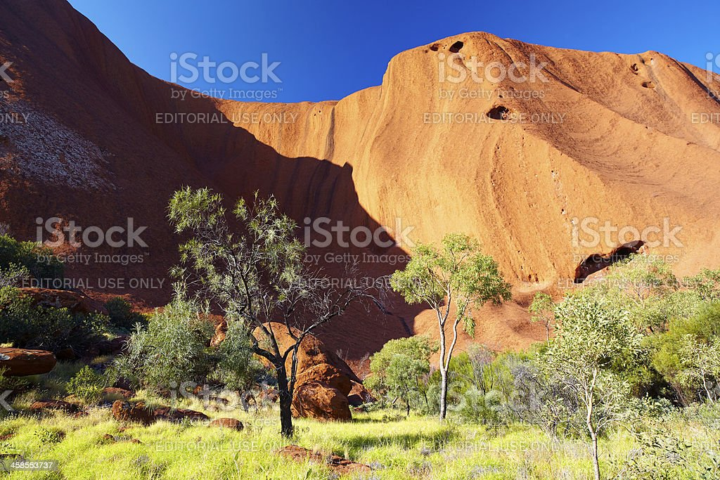 Uluru & Eucalypt Trees Australian Outback royalty-free stock photo